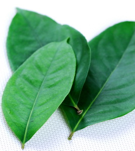 Bay Leaves for High Uric Acid Disease