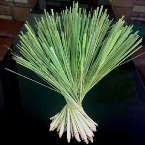 Lemongrass as a Traditional Treatment for Cough