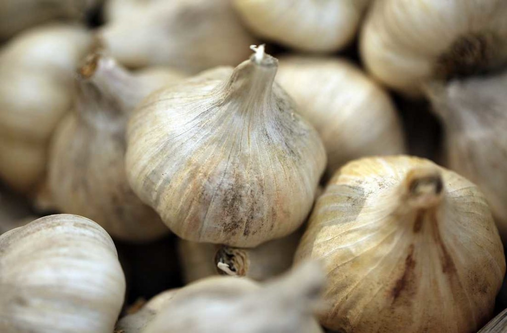 Garlic to Cure Digestive System