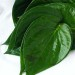 Cure Bronchitis Using Betel Leaves